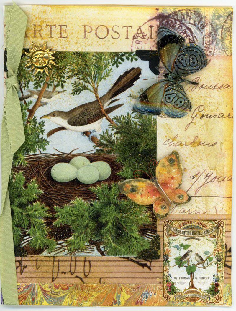 Tweetyjil bird 3