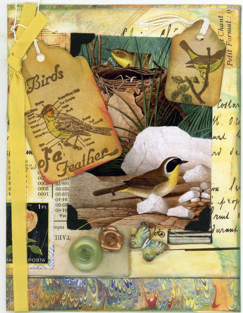 Tweetyjil bird 4