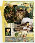Tweetyjil bird 8